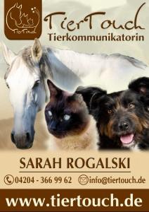 Tierkommunikation Onlinekurse - JEDERZEIT