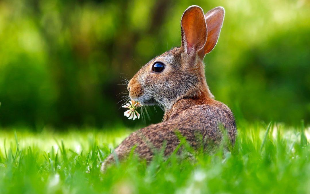 Ostern – warum ich mich endlich wieder darauf freue!