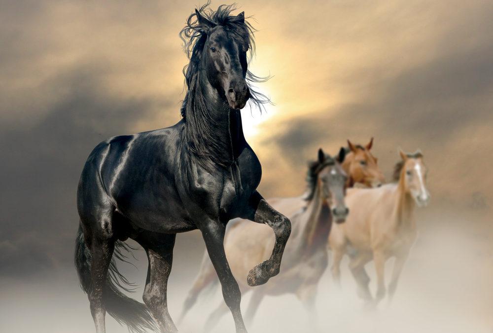 Kommunikation mit dem Kollektiven Pferde-Bewusstsein