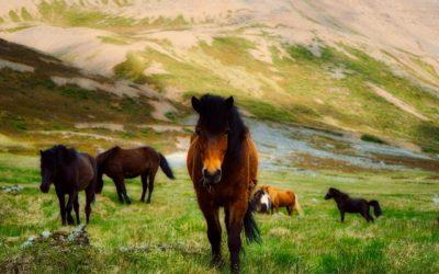 TEIL III – Kommunikation mit dem Kollektiven Pferde-Bewusstsein