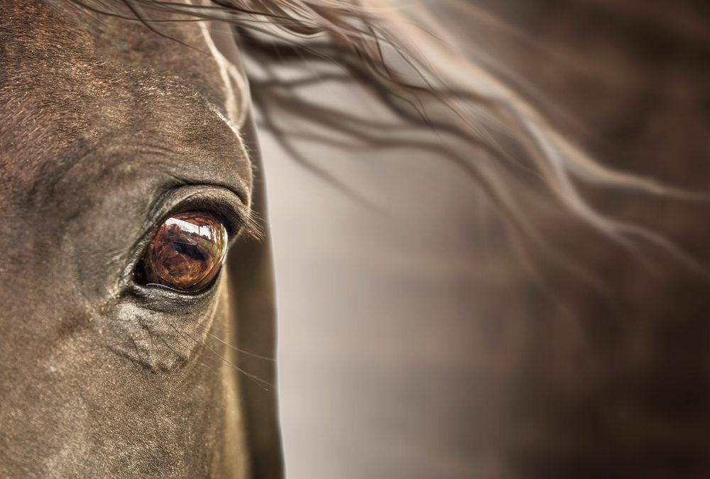 TEIL II – Kommunikation mit dem Kollektiven Pferde-Bewusstsein