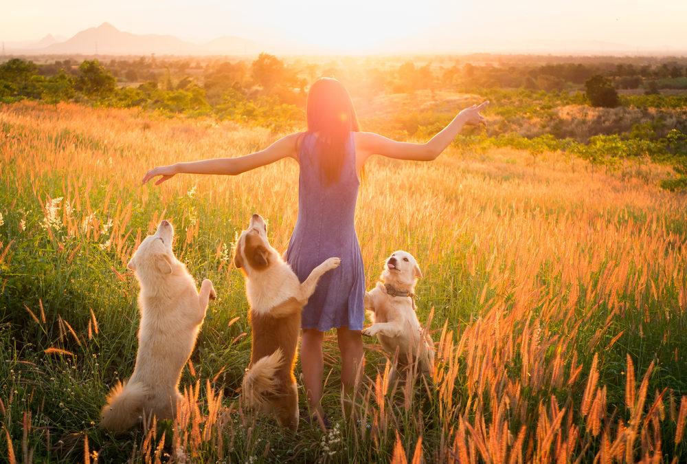 Die 3 größten Hindernisse in der Tierkommunikation und wie du sie überwindest